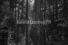 Forêt à Vancouver